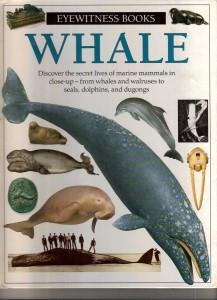 eyewitness books Whale