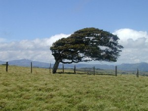 tree-in-wind